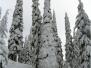 2006.01 - De Calgary à Panorama (Canada)